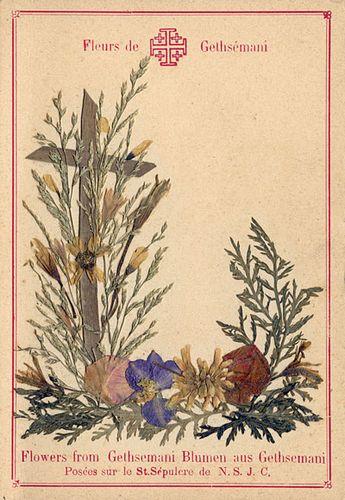Gethsemane_Flowers