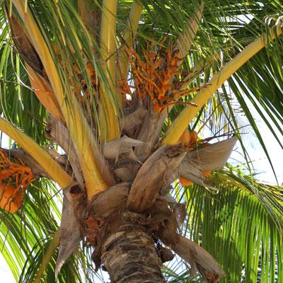 Palmtreewb