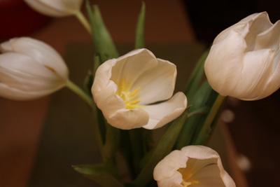 Tulipheads